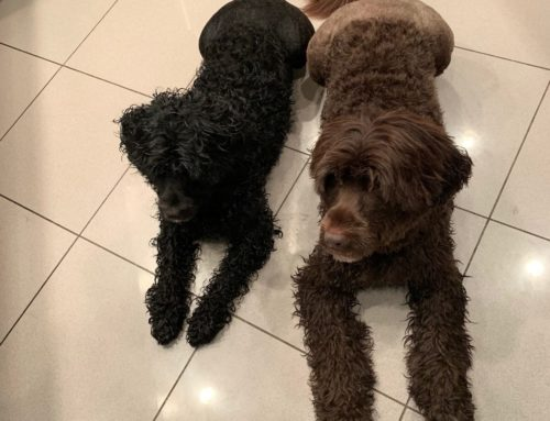 Yogi & Cinder's Story